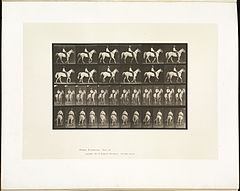 Animal locomotion. Plate 579 (Boston Public Library).jpg