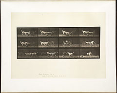 Animal locomotion. Plate 715 (Boston Public Library).jpg