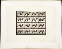 Animal locomotion. Plate 738 (Boston Public Library).jpg