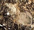 Apatite-Muscovite-201728.jpg