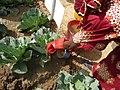 Applying urine next to the vegetables (5984471306).jpg