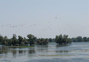 Osijek-Baranja County - Kopački Rit