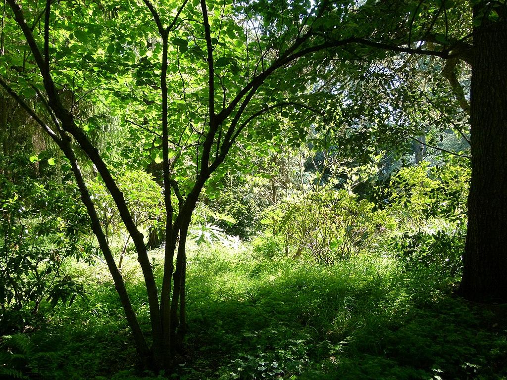 File arbres au jardin albert kahn 4 jpg wikimedia commons for Jardin albert kahn
