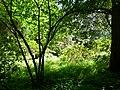 Arbres au jardin Albert Kahn 4.JPG