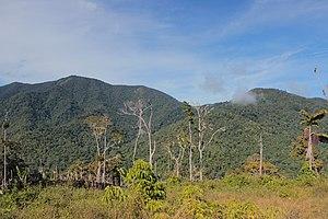 Mount Arfak - Image: Arfak Mountains