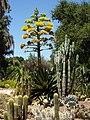 Arizona Cactus Garden, Stanford University, Palo Alto, CA, USA.JPG