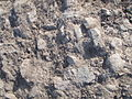 Arkeologisk utgrävning i Fiskeby, den 16 juni 2010q.JPG
