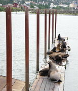 Astoria Sea Lions.jpg
