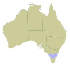 australia locator bass straitpng