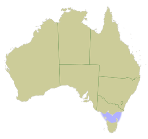 """Bass Strait Triangle - Map of Australia with Bass Strait """"triangle"""" marked in light blue"""