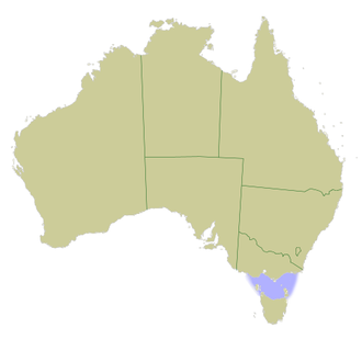 Bass Strait - Map of Australia with Bass Strait marked in light blue