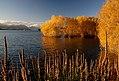Autumn at Lake Tekapo NZ (14) (8670130539).jpg