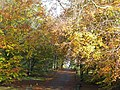 Autumn beeches at Balbirnie Park - geograph.org.uk - 1562293.jpg