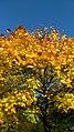 Autumn in Whitworth Park I - panoramio.jpg
