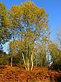 Autumn in Winterbourne Wood - geograph.org.uk - 71358.jpg