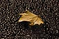 Autumn leaf (295804130).jpg