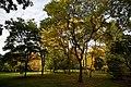 Autumn trees Beale Arboretum West Lodge Park - Hadley Wood Enfield London.jpg