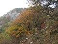 Autunno a Draga Sant'Elia - panoramio.jpg