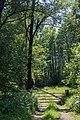 Auwald beim Dellacher Schupfen.jpg