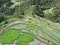 Banaue Viewpoint (3294282971).jpg