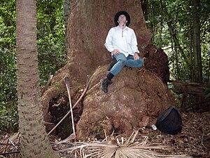 Eucalyptus botryoides - Base of a large Bangalay, Hacking River, Australia