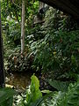 Barbican Conservatory on 7 Aug 2014 01.jpg