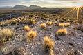 Basin and Range National Monument (20987834954).jpg