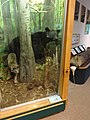 Battle Creek Cypress Swamp 06.jpg