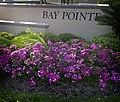 Bay Pointe Flowers (4518901687).jpg