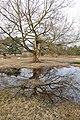 Bayern Erlangen Naturschutzgebiet Exerzierplatz Winter 3.jpg
