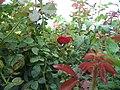 Beautiful photo through all plants.jpg