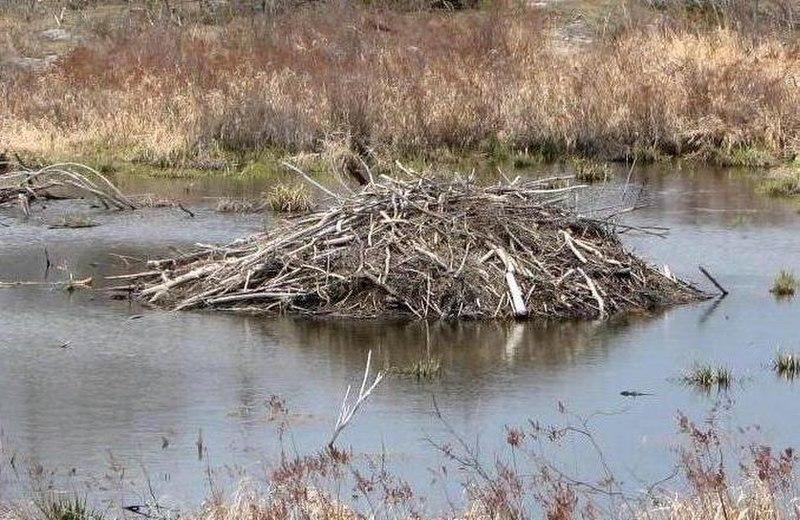 Beaverlodge.JPG