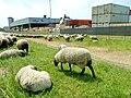 Bei der Wollkämmerei (2).jpg