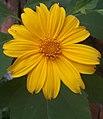 Beleza da flor.jpg