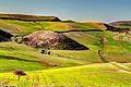 Belle nature entre Sedrata et Guelma.jpg