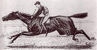 Ben Ali (horse) - Image: Ben Ali (horse)
