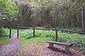 Bench and footpath into One Tree Hill - geograph.org.uk - 1533109.jpg