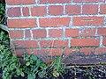 Benchmark on bridge parapet in Farm Road - geograph.org.uk - 2121374.jpg