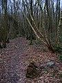 Bentley Wood - geograph.org.uk - 323494.jpg