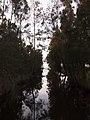 Berkeley Vale - panoramio (2).jpg