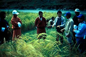 Rice production in Bhutan - Agricultural officials and rice cultivators.