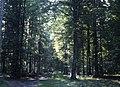 Białowieża forest 1991 22.jpg