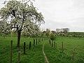 Bilzen - panoramio (5).jpg