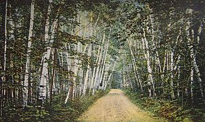 Marlborough, New Hampshire - Image: Birch Avenue, Marlborough, NH