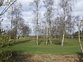 Birches on Swaffham Golf Course - geograph.org.uk - 507402.jpg