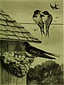 Bird stories (1903) (14726869196).jpg