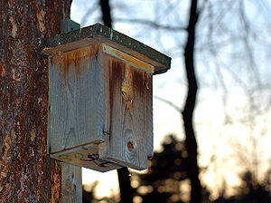 Typical bird nest box