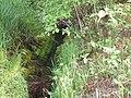 Blüßengraben Einleitung bei Kneippkuranlage.jpg