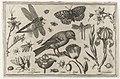 Bloemen, libelle en vogel.jpeg