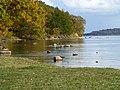Bodden bei Wreechen im Biosphärenreservat Südost-Rügen im Herbst.jpg